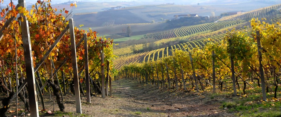 http://www.verdunopelaverga.it/wp-content/themes/paradise/timthumb.php?src=http://www.verdunopelaverga.it/wp-content/uploads/2011/04/slide3territorio1-960x400.jpg&w=80&h=50&zc=1